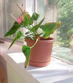 Растения улучшают настроение офисных работников